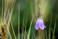 пурпур цветка Стоковые Фото