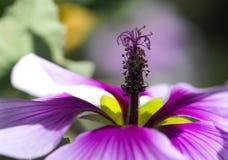 пурпур цветка Стоковое Фото