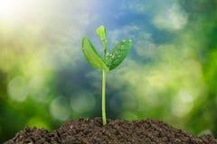 Пускайте ростии расти от почвы на запачканной зеленой предпосылке bokeh и неба стоковая фотография rf