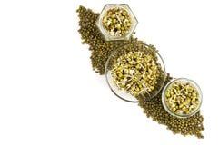 Пусканные ростии фасоли mung в 3 опарниках Стоковая Фотография RF