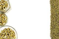 Пусканные ростии фасоли mung в 3 опарниках Стоковые Фото