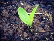 Пускать ростии весной Стоковое Изображение RF