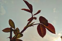 Пускать ростии жизни стоковое фото