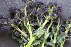 пускать ростии пурпура брокколи Стоковое фото RF