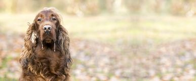 Пускать собака стоковая фотография rf