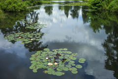 Пусковые площадки лилии воды на озере стоковые фотографии rf