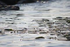 Пусковые площадки лилии Стоковое Фото