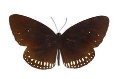 пустая бабочка книги цветастая расцветка смогла изолированная белизна версии малышей используемая страницами Стоковые Фото
