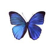 пустая бабочка книги цветастая расцветка смогла изолированная белизна версии малышей используемая страницами Стоковая Фотография RF