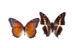 пустая бабочка книги цветастая расцветка смогла изолированная белизна версии малышей используемая страницами Стоковое Изображение
