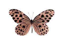 пустая бабочка книги цветастая расцветка смогла изолированная белизна версии малышей используемая страницами Стоковое Изображение RF