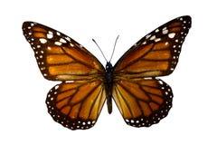 пустая бабочка книги цветастая расцветка смогла изолированная белизна версии малышей используемая страницами Стоковое Фото