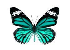 пустая бабочка книги цветастая расцветка смогла изолированная белизна версии малышей используемая страницами Стоковые Фотографии RF