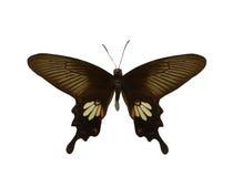 пустая бабочка книги цветастая расцветка смогла изолированная белизна версии малышей используемая страницами Стоковая Фотография