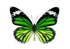 пустая бабочка книги цветастая расцветка смогла изолированная белизна версии малышей используемая страницами Стоковые Изображения RF