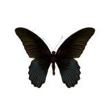пустая бабочка книги цветастая расцветка смогла изолированная белизна версии малышей используемая страницами Стоковое фото RF
