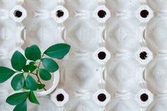 Пустая белая раковина яичка цыпленка с зеленым цветом выходит в пустой бумажный поднос Взгляд сверху Стоковое Изображение RF