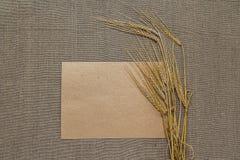 Пустая бумага с колосками пшеницы Стоковая Фотография