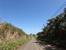 Пустая грязная улица с высокой травой Стоковое Изображение RF