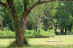 Пустая деревянная смертная казнь через повешение качания от большого дерева в зеленом саде Стоковые Фото