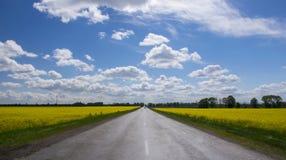 Пустая дорога асфальта между желтым цветя полем рапса в сельском ландшафте под голубым небом с белыми пушистыми облаками стоковые фотографии rf