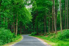 Пустая дорога между деревьями глубоко в лесе Стоковое Изображение