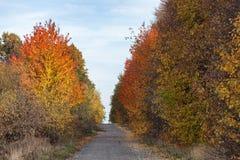 Пустая дорога осени Стоковые Фото