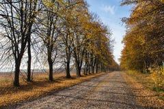 Пустая дорога осени Стоковая Фотография