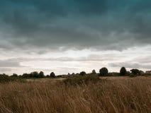 Пустая задняя серия поля с травой и небом тростников Стоковые Фото