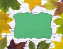 Пустая зеленая поздравительная открытка на белой деревянной предпосылке с лист осени Стоковые Фотографии RF
