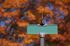 пустая зеленая улица знака Стоковое Изображение RF