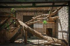Пустая клетка зоопарка стоковые фотографии rf