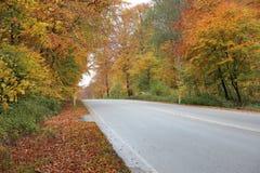 Пустая дорога в лесе осени с красивыми цветами Стоковая Фотография