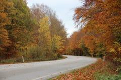 Пустая дорога в лесе осени с красивыми цветами Стоковые Фотографии RF