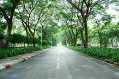 Пустая дорога сельской местности асфальта через тоннель деревьев Стоковые Фото