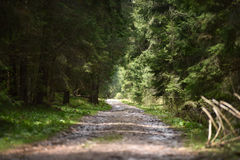 Пустая перспектива дороги в лесе Стоковое Фото