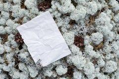 Пустая пустая, скомканная бумага под ногами в древесинах Стоковое Изображение RF