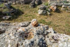 Пустая раковина улитки на камнях Стоковое Фото