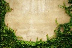 Пустая рамка стены зеленой травы как предпосылка стоковые изображения rf