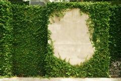 Пустая рамка стены зеленой травы как предпосылка стоковые фотографии rf