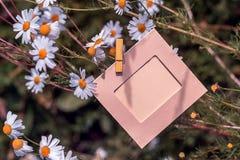 Пустая рамка с маргаритками outdoors Стоковое Изображение