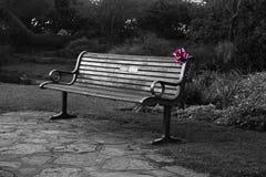 Пустая скамейка в парке с сброшенным присутствующим украшением Стоковые Изображения RF