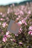 Пустая смертная казнь через повешение рамки на розовых цветках outdoors Стоковое Изображение RF