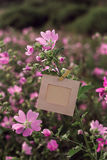 Пустая смертная казнь через повешение рамки на розовых цветках outdoors Стоковые Изображения RF