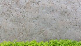 Пустая стена цемента и зеленое дерево, космос экземпляра текстуры b цемента Стоковые Изображения