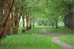 Пустая тропа вдоль старых зеленых деревьев, деревц в городе паркует Стоковое фото RF