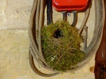 Пустое гнездо крапивниковые Стоковые Изображения RF