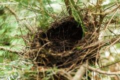Пустое гнездо птицы в ветвях, животных леса стоковое фото rf