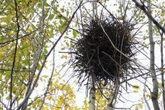 Пустое гнездо ` s птицы в осени Пустое гнездо птицы на дереве Опорожните малое гнездо птицы на кусте или дерево в лесе Стоковое Фото