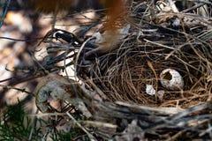 Пустое гнездо ` s птицы на дереве Стоковое Изображение RF